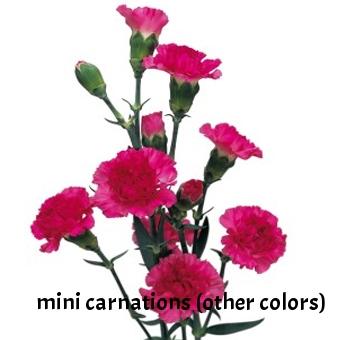 24-Hot-Pink-Mini-carnations.jpg