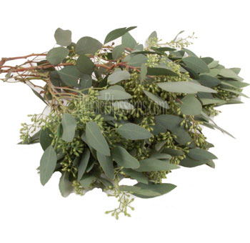 20-seeded-eucalyptus.jpg