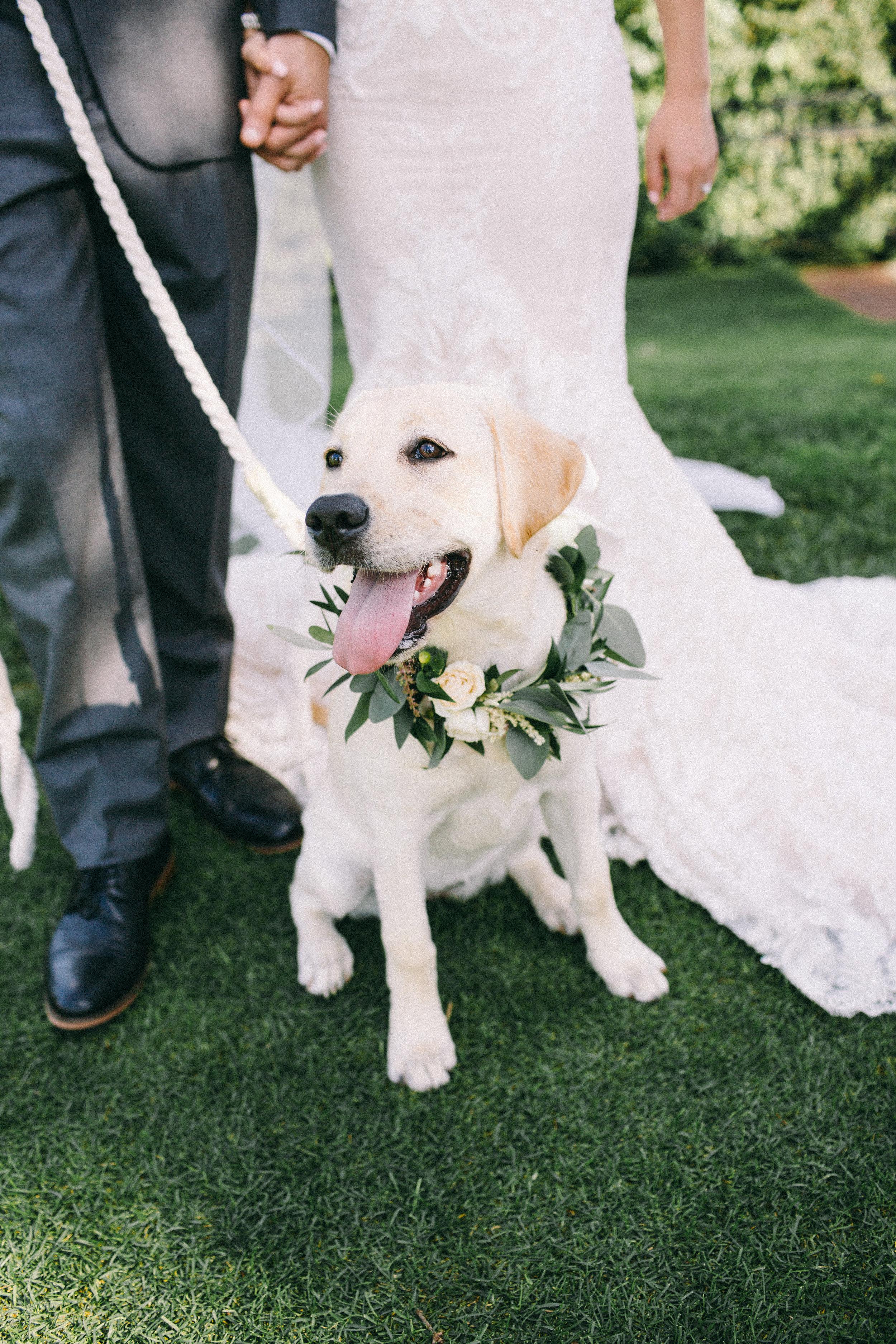 Dog Floral Collar Wedding Jaimee Morse Photography