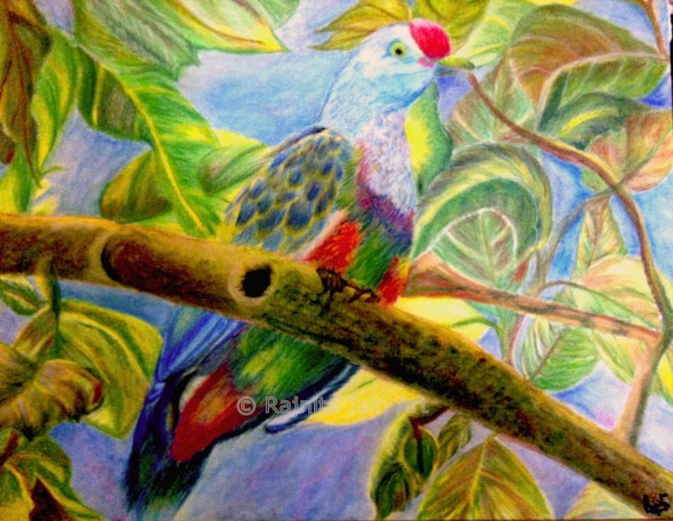 Bird of the Season