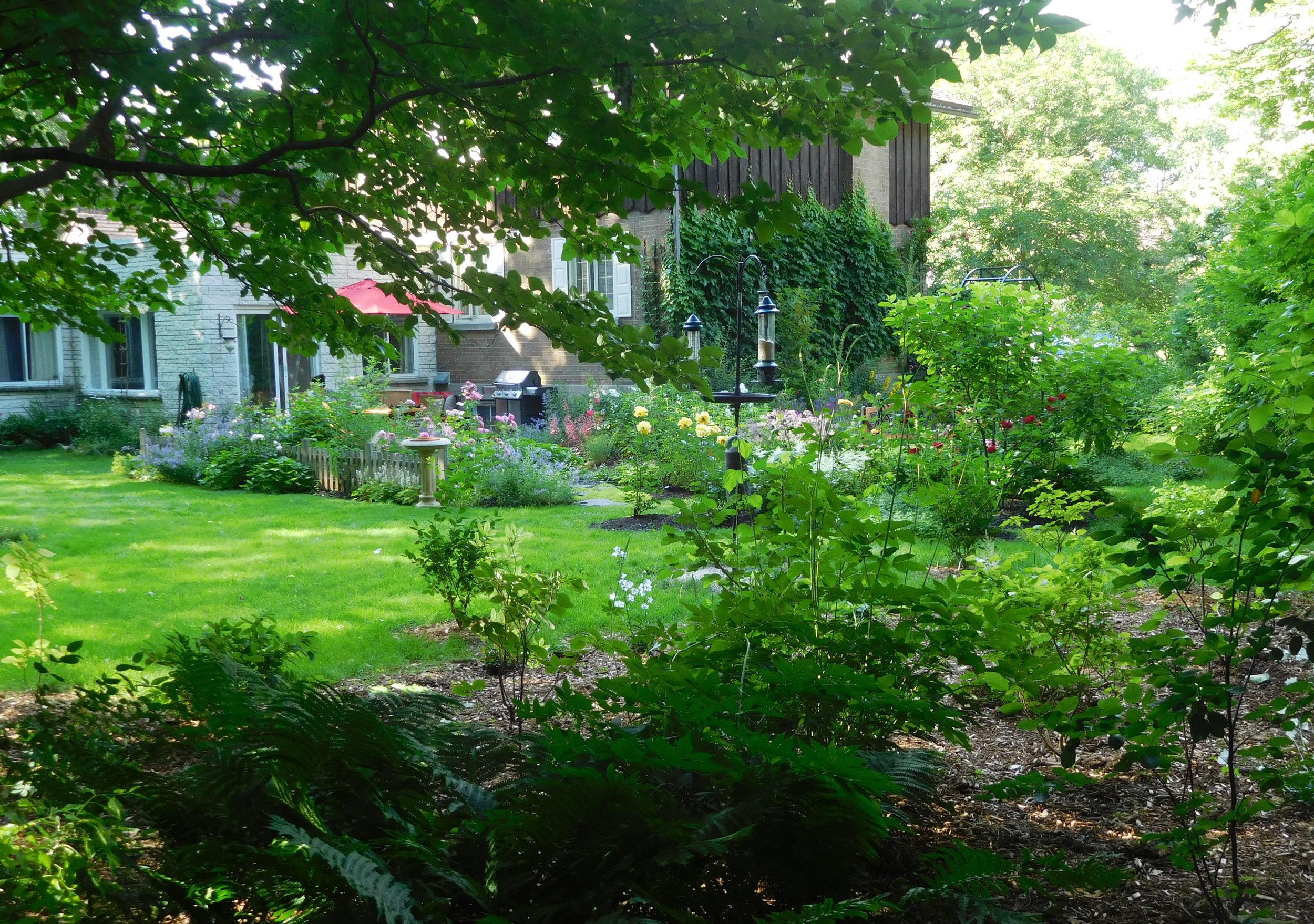Jardin sauvage naturel