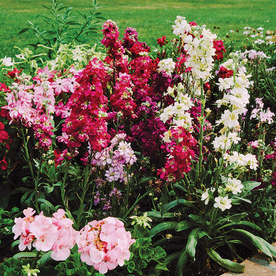 The Best Annuals For Cutting