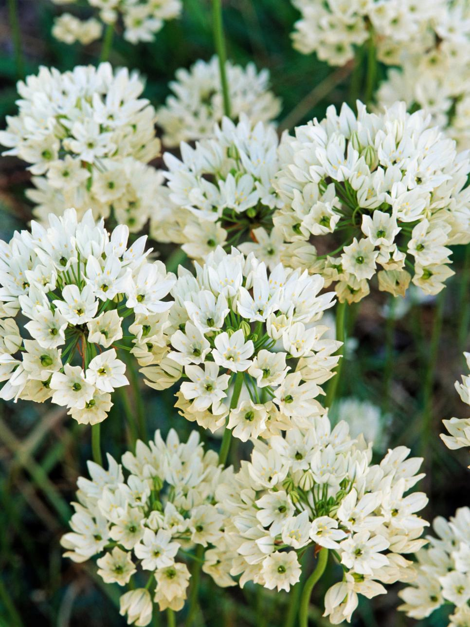 White Bedding: Incredible Ivory Flowers
