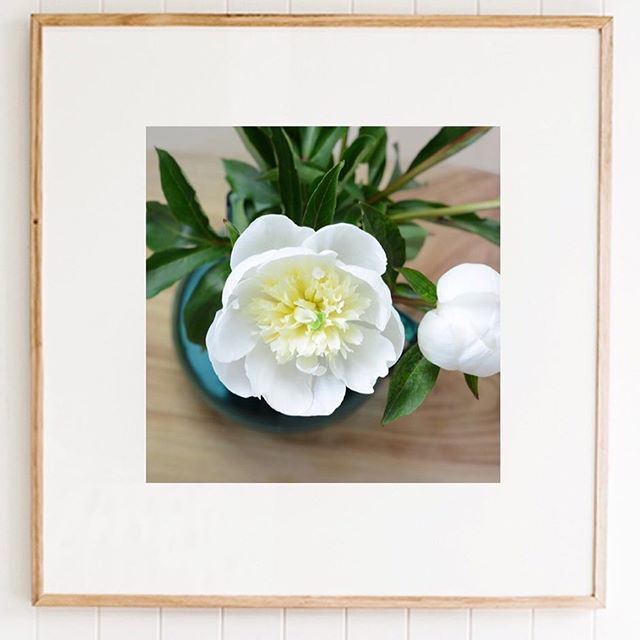 I love photographing flowers & plants & I've started selling limited editions of my work 😍 . #angielouphotography #angelanicholsonphotography #art #limitededition #peonies #flowers #framed #square #white #flora #oak #vase #bottlegreen #passion #photographicart #photographicartist