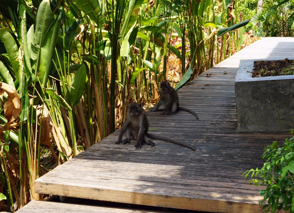 A couple of monkeys spotted earlier in the day!
