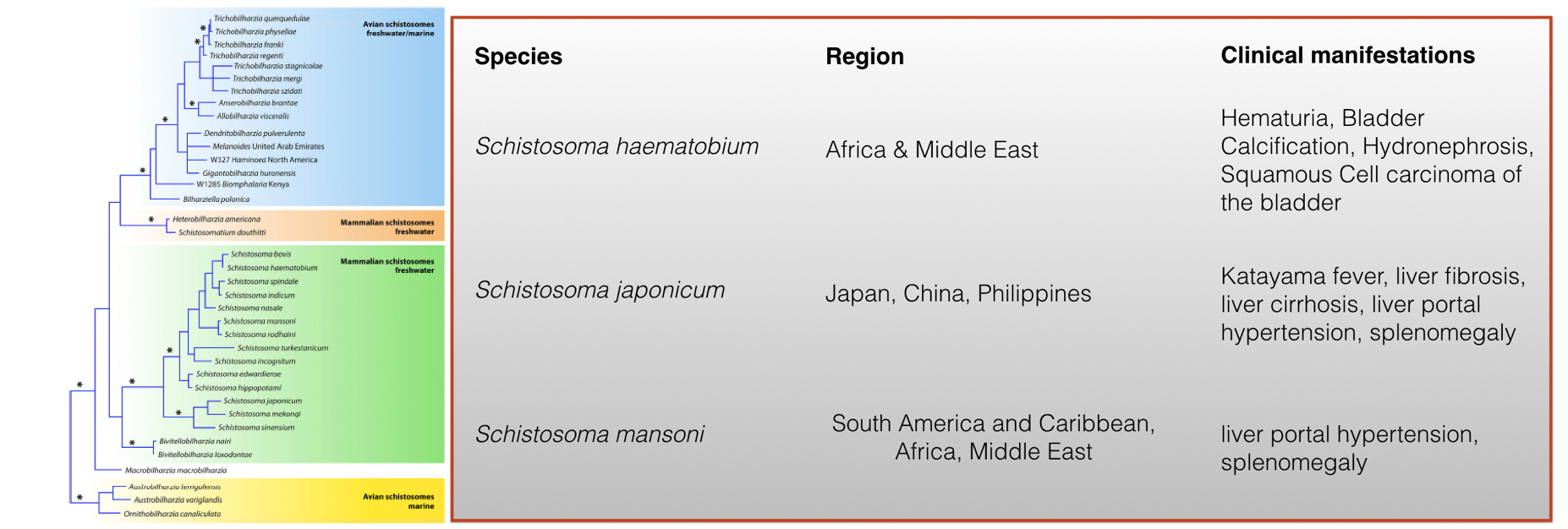 Source of phylogeny image: Reference [2]