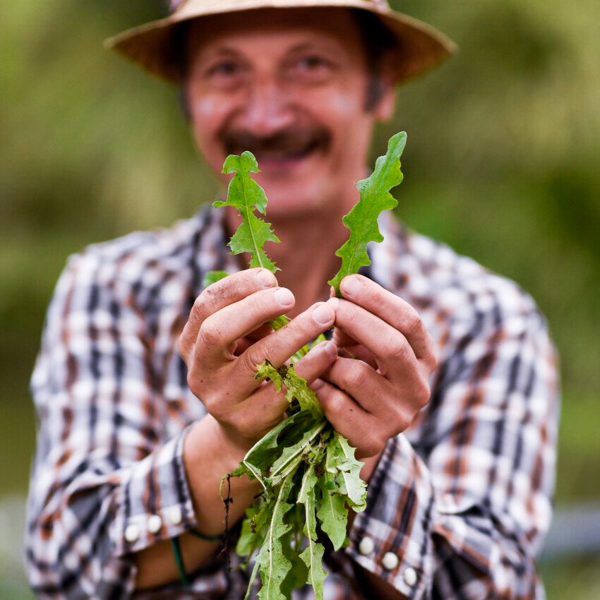 FOODIE WALKING TOUR   Discover Macquarie Park's secret greenways and learn to forage for the food that grows around us on this free, lunchtime waking tour.  Bookings required.   12.30, 22 October    Macquarie Uni Metro [   Map   ]