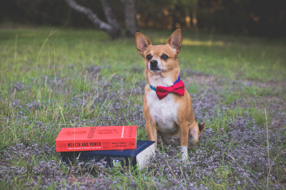 dog portrait with books in park