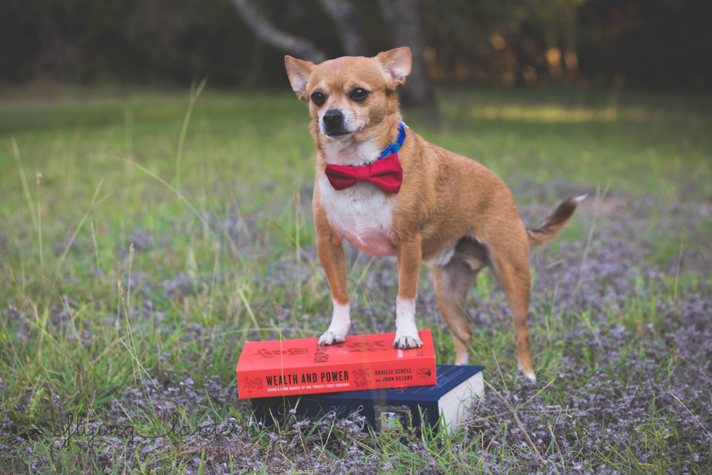 dog with paws on book pile in park