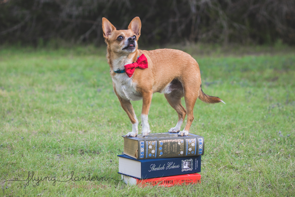 dog with book pile including jane austen and sherlock holmes