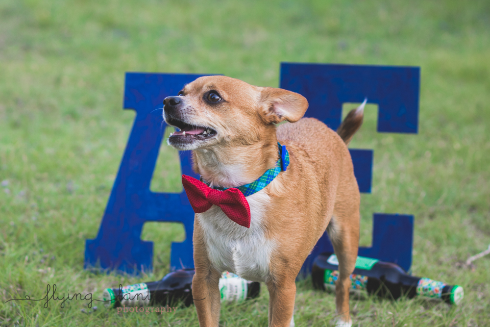 dog with letters and beer in background