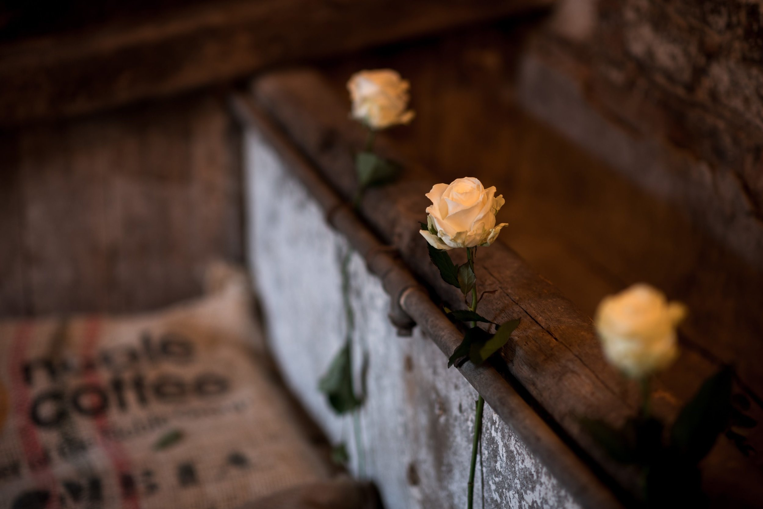 Classic white roses in The Normans Cow Stalls Photo by www.edpereira.com