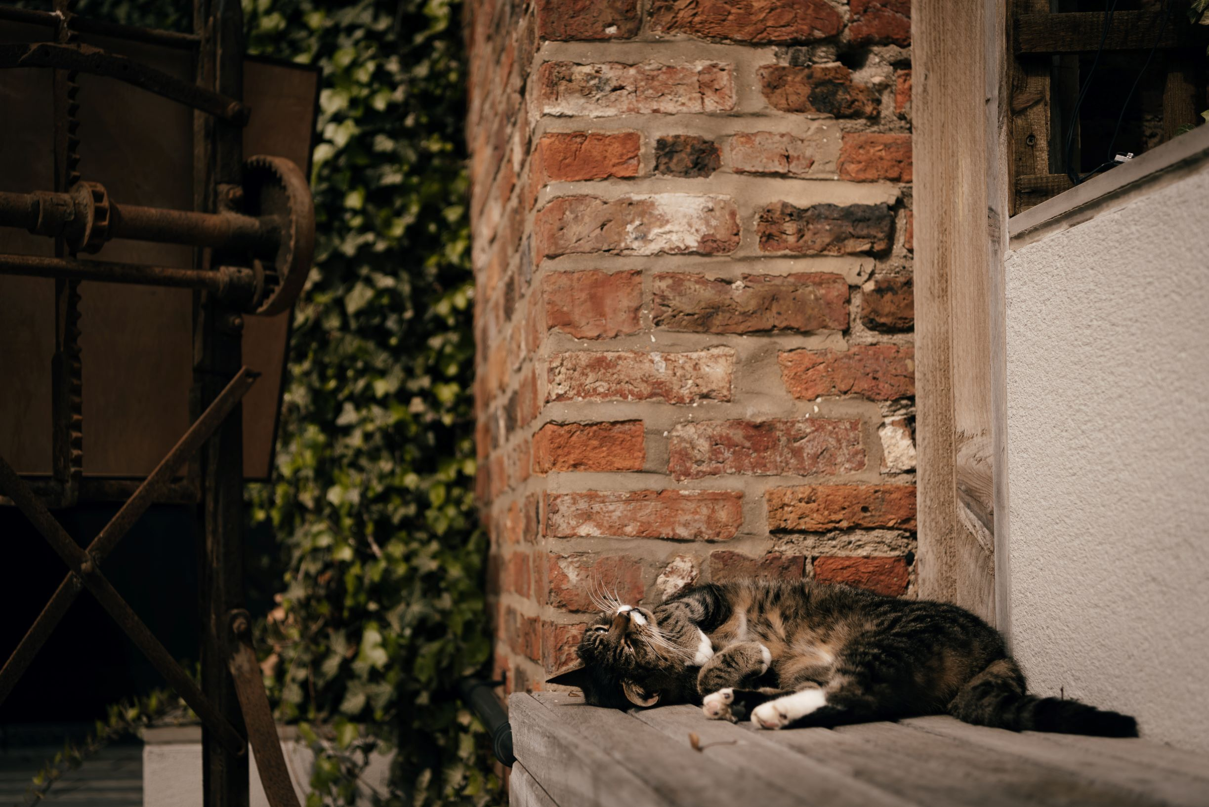 'Toilet Cat' - The Normans' resident feline - relaxes in the sun in The Courtyard. Photo by www.julesbarron.com