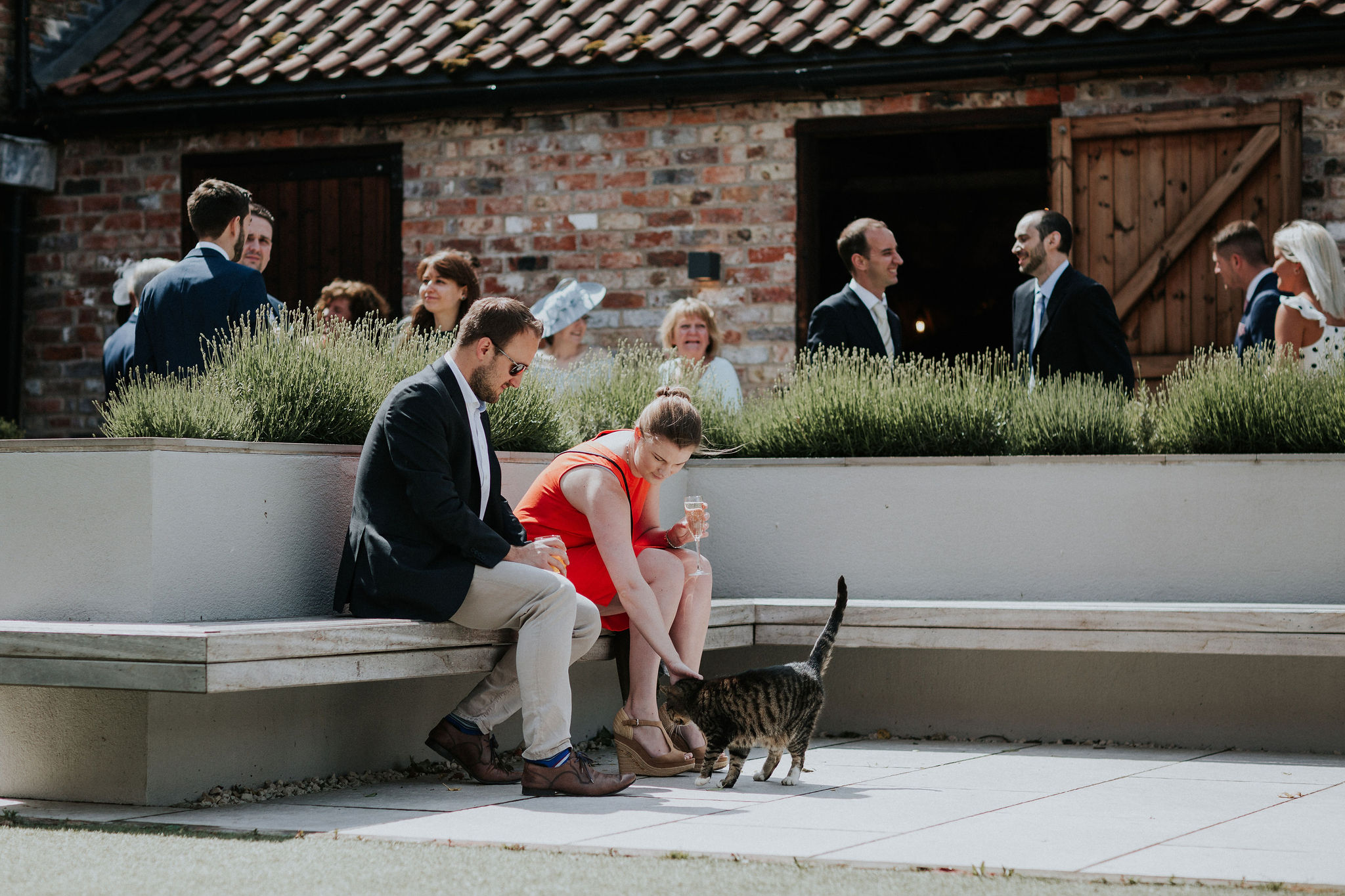 Resident feline Toilet Cat greets guests in The Normans Courtyard.jpg