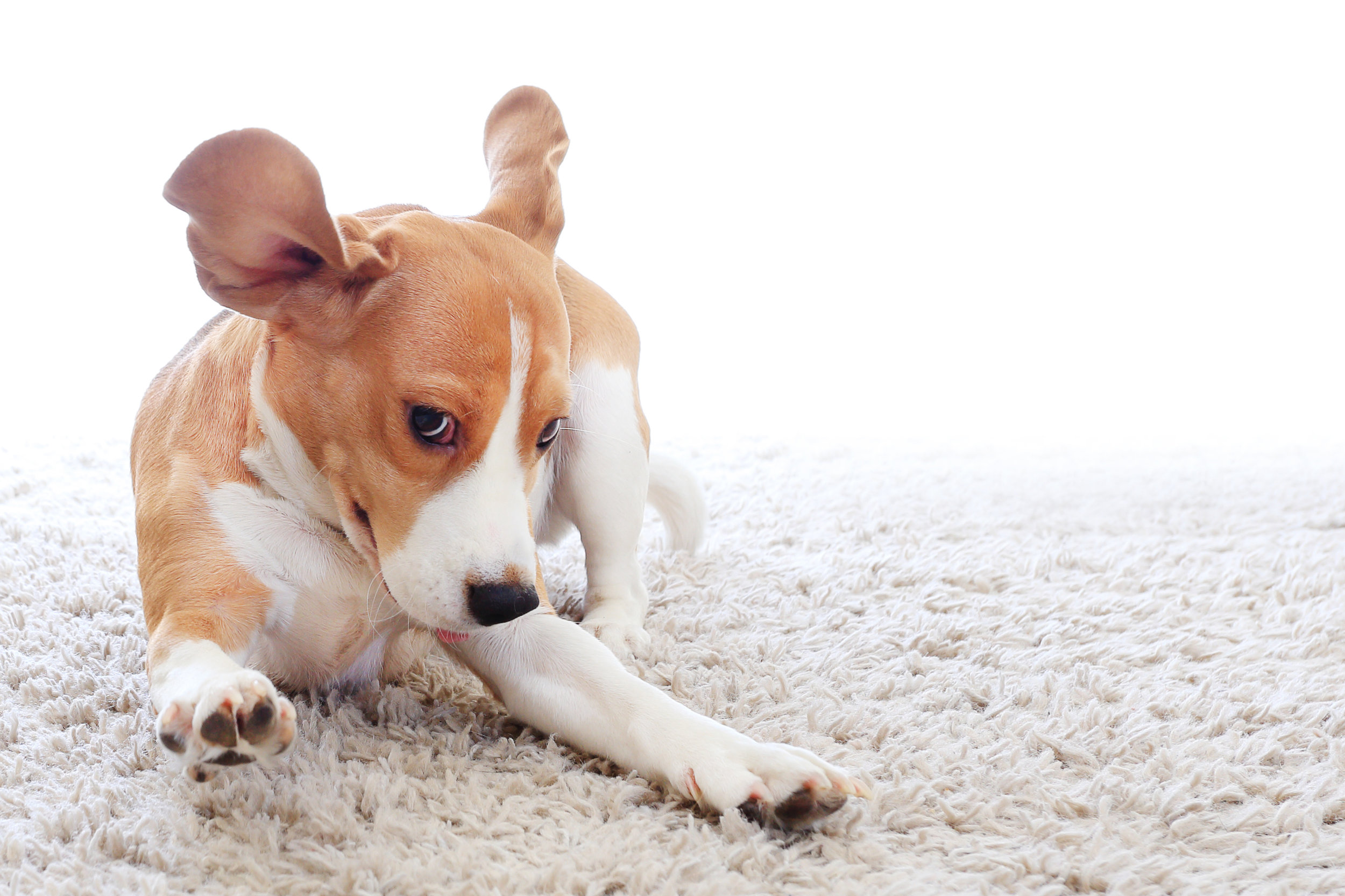 Pet Stain/Odor Treatment