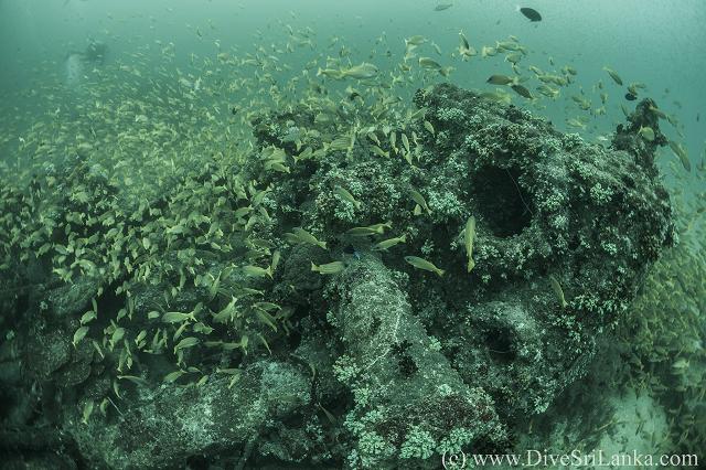 HMS Hollyhock Stern Side Debris2-small.png