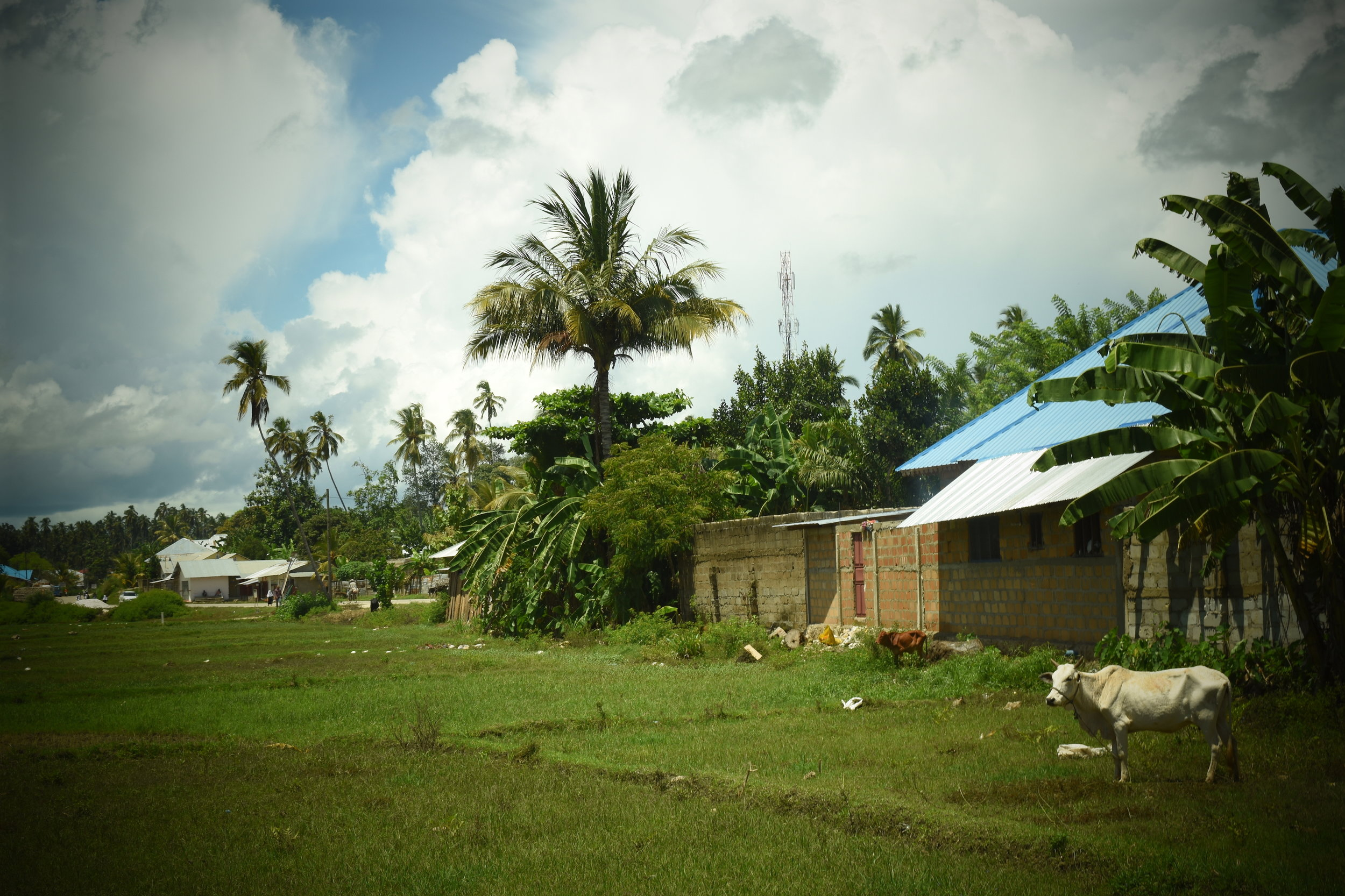 Uzi Island