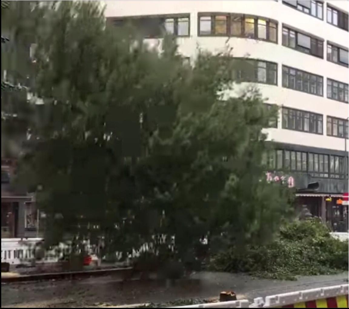 Her deiser et av 12 trær i bakken etter ordre fra Lan Marie Berg (MDG)