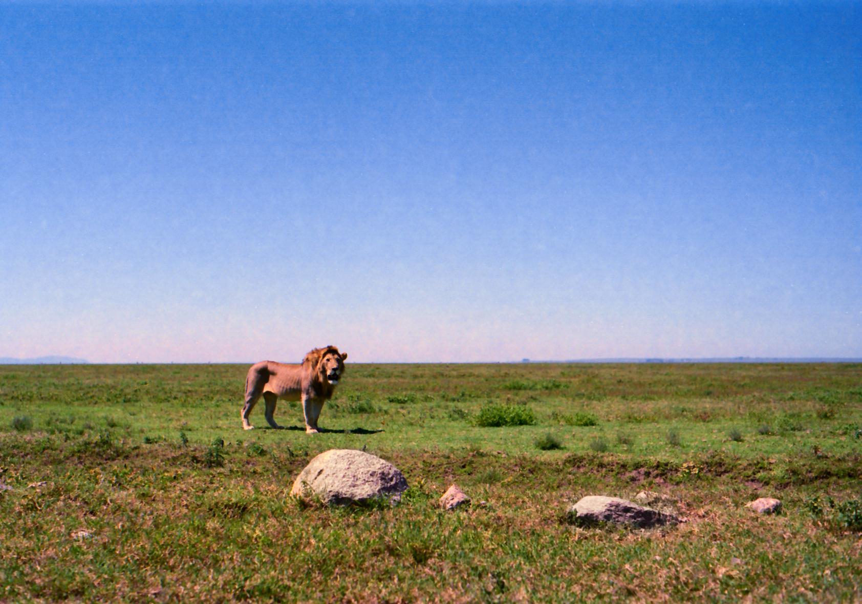 Afrika ny 13.jpg