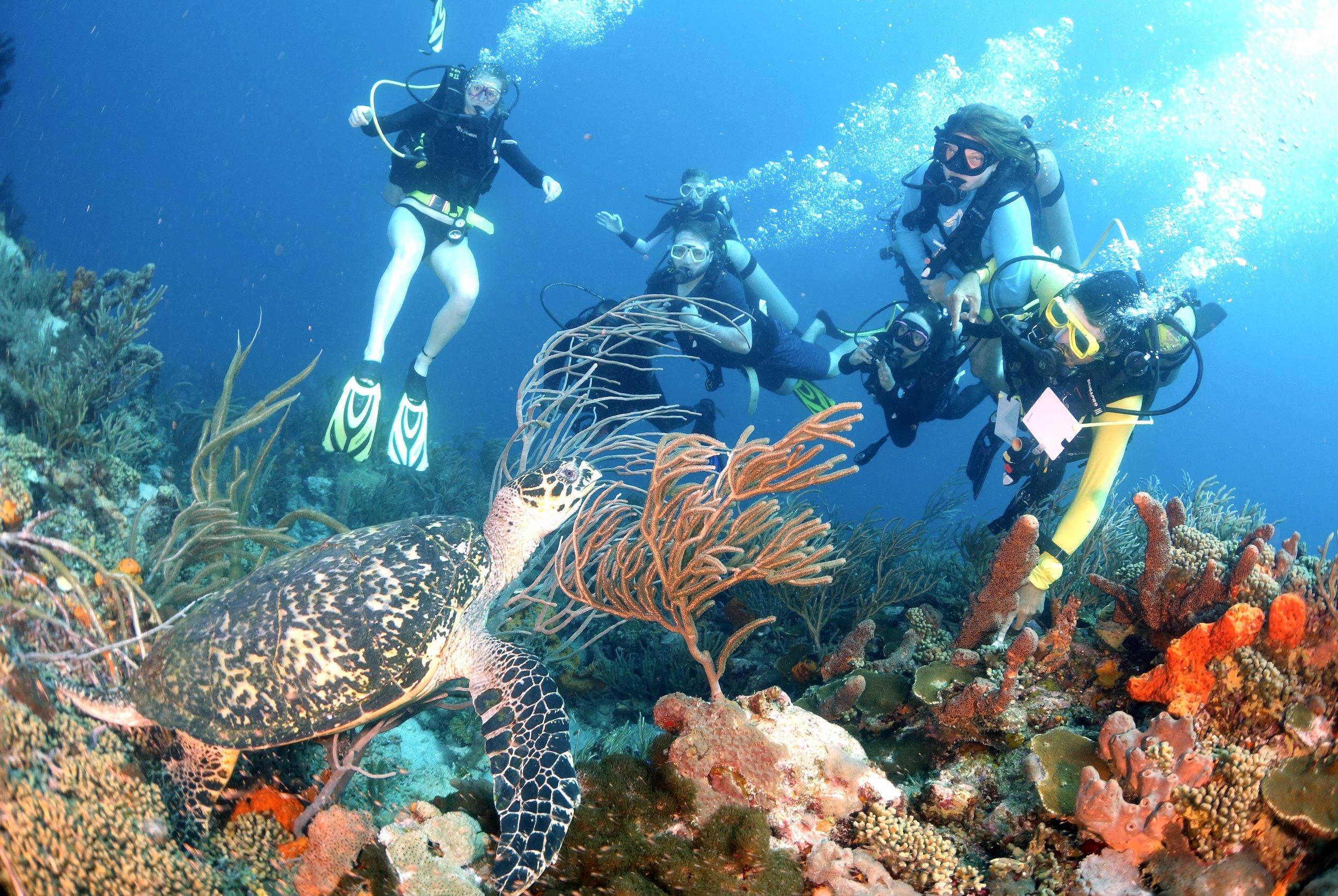 Tobago Dive Pics19.jpg