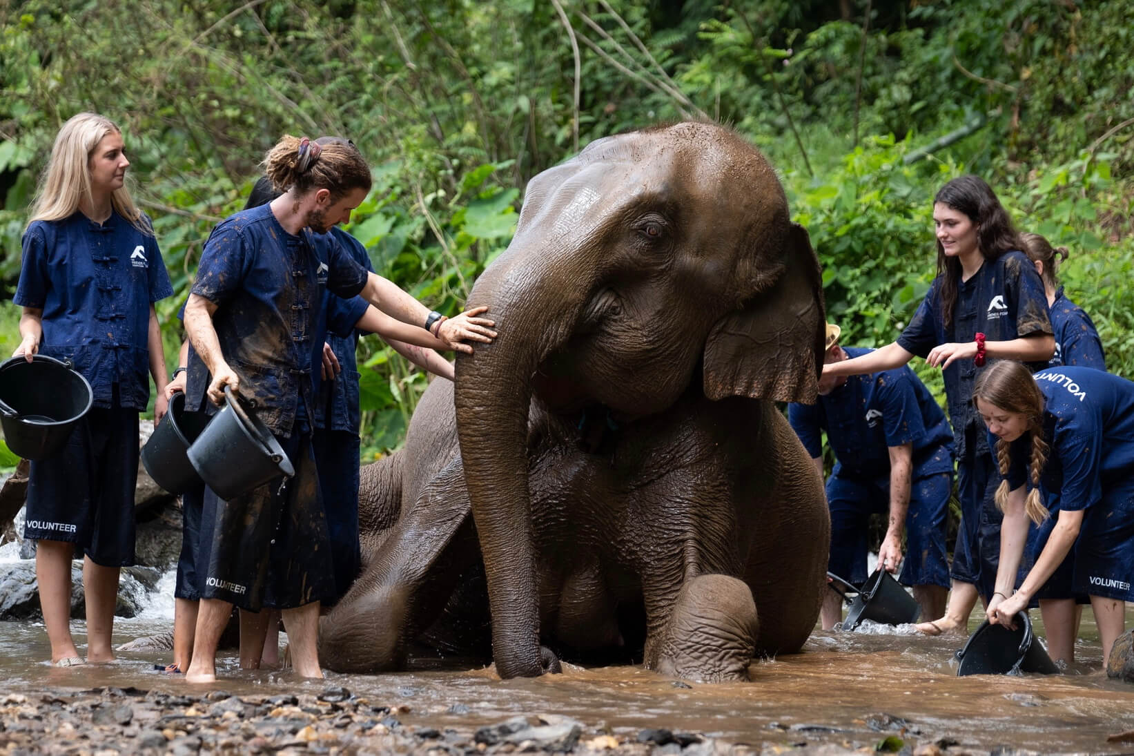 elephant and students