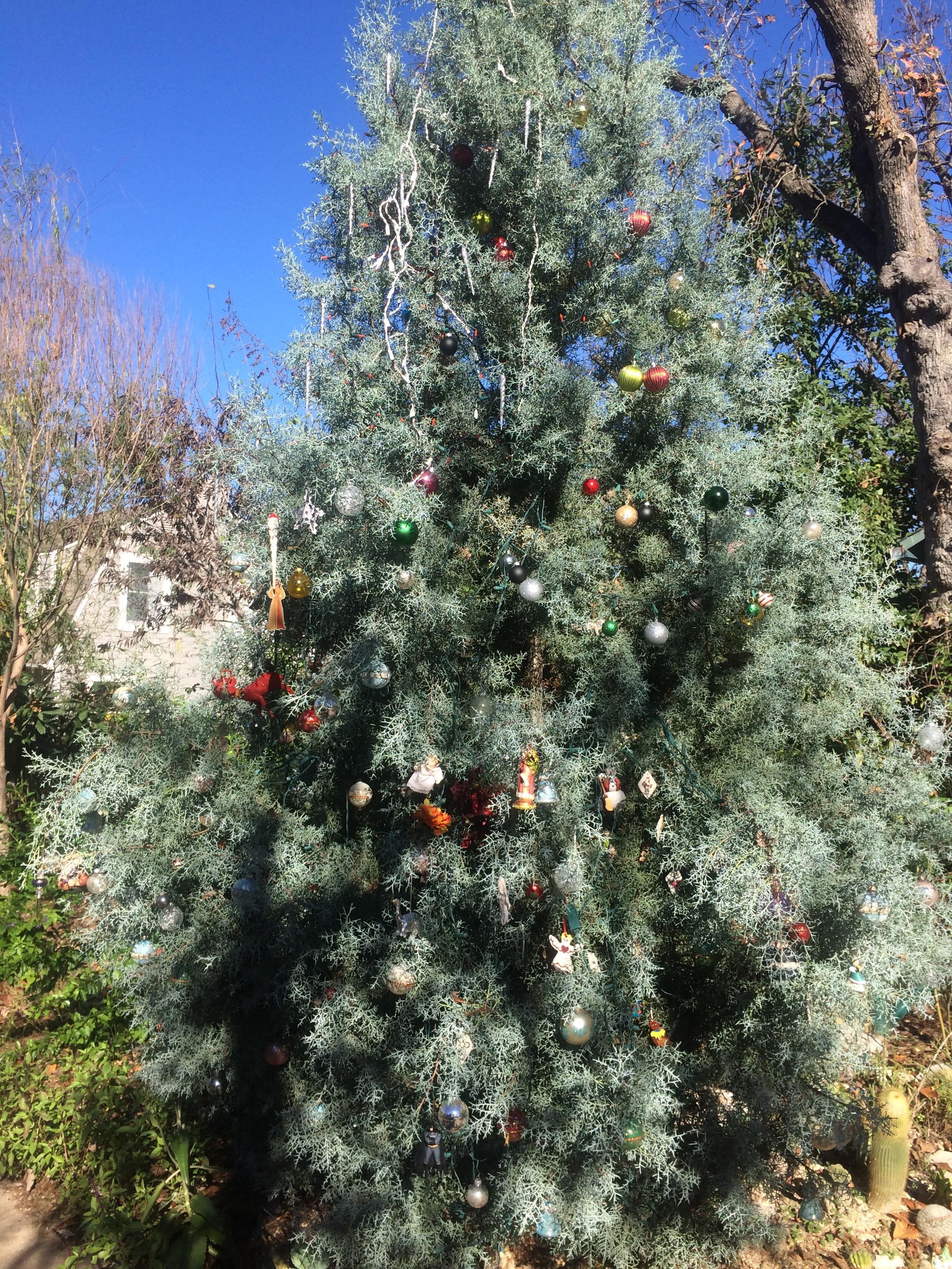 Austin Christmas Tree