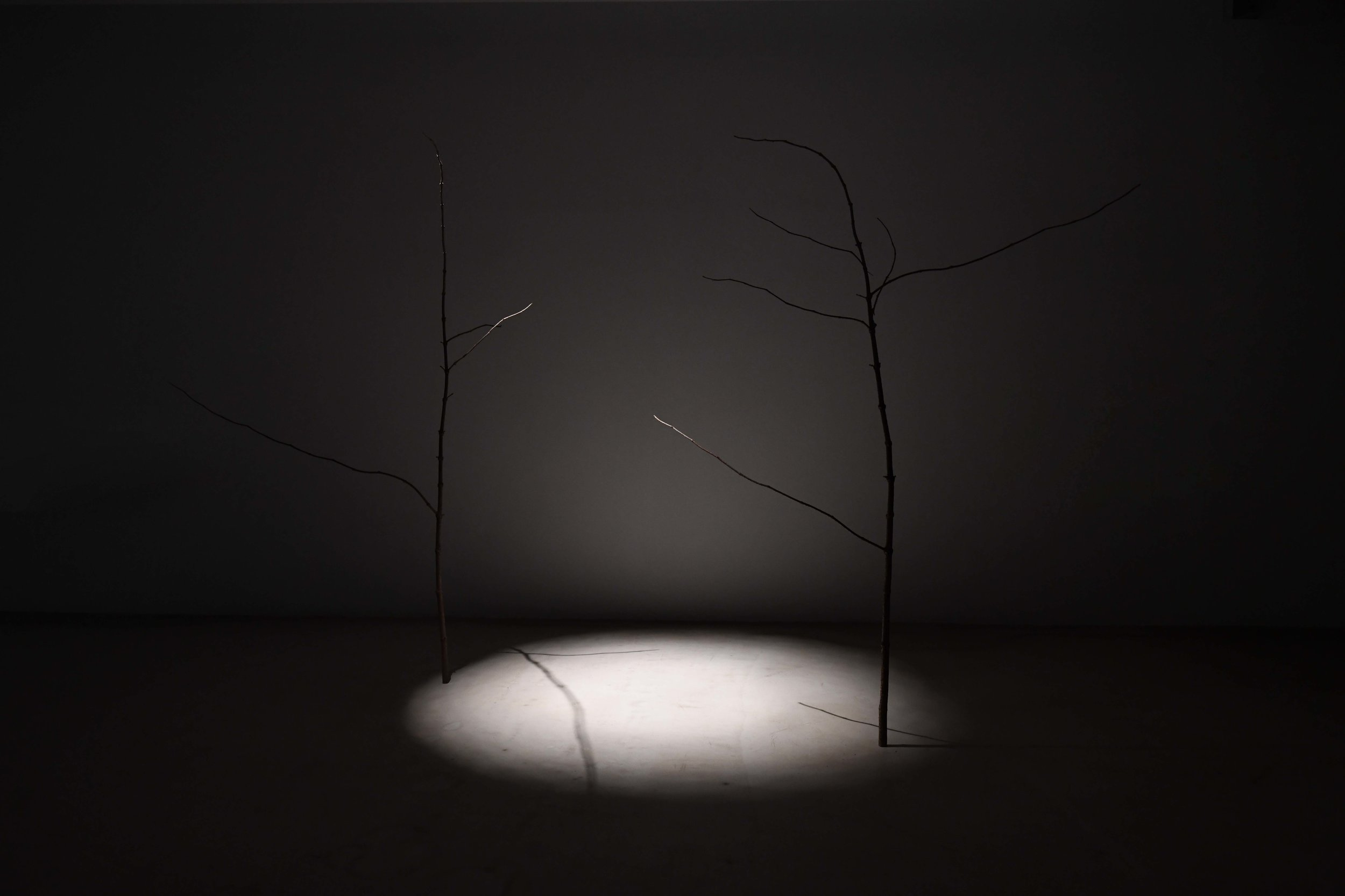 2018,installation, branches and light