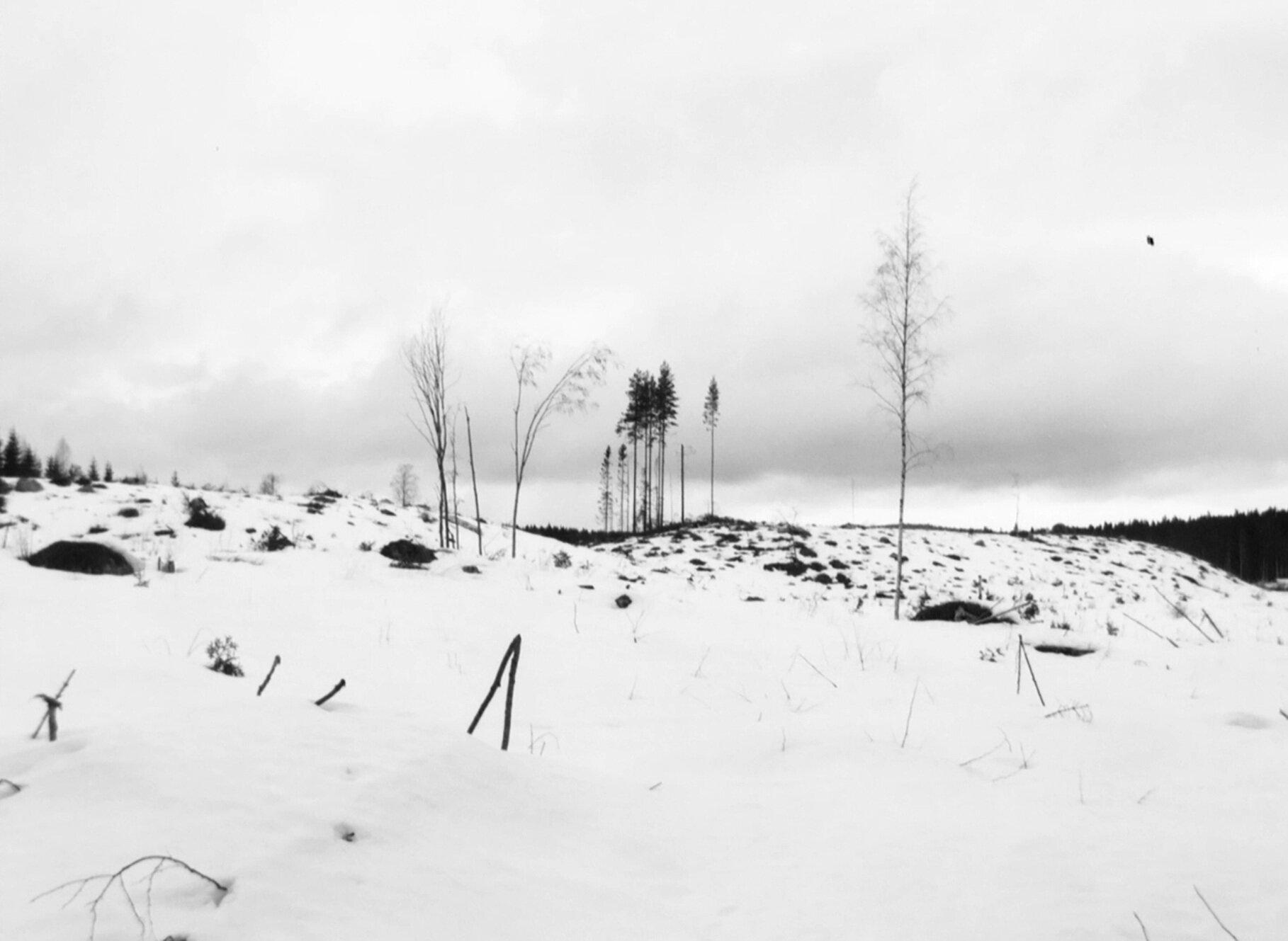 Frame_Variaciones_Winterreise-5.jpg