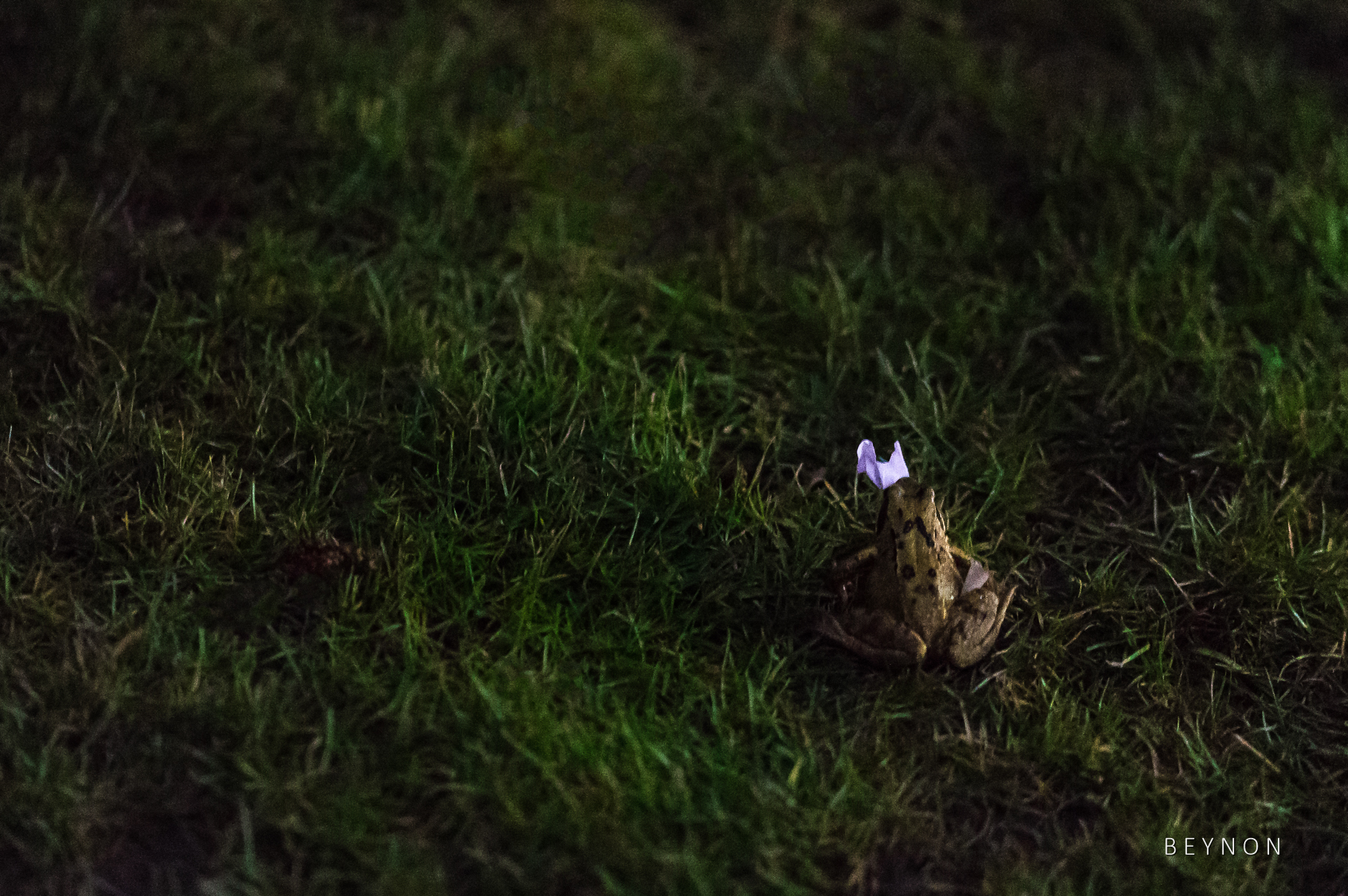 Frog hops away with confetti