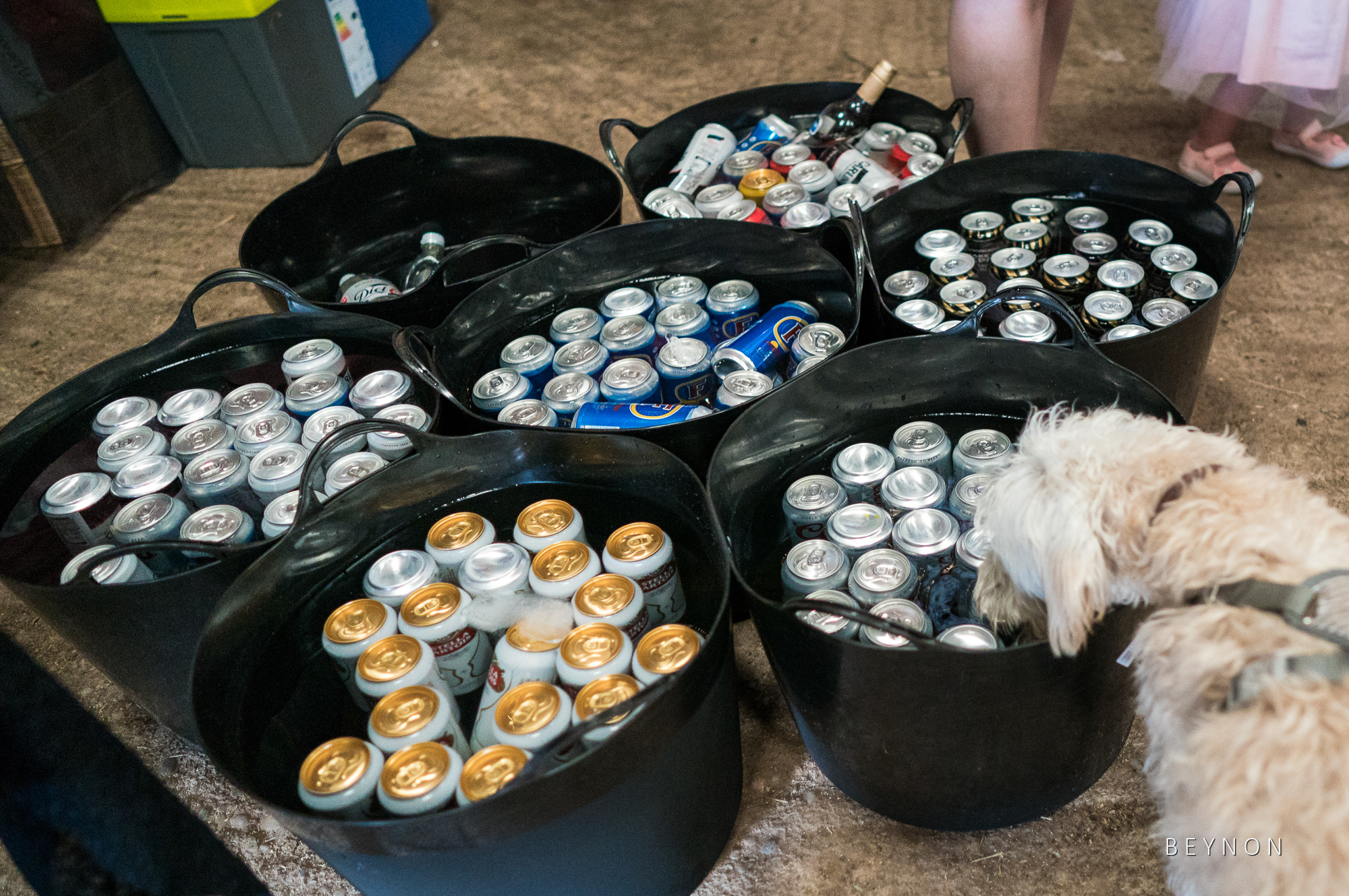 Dog checks out the beer