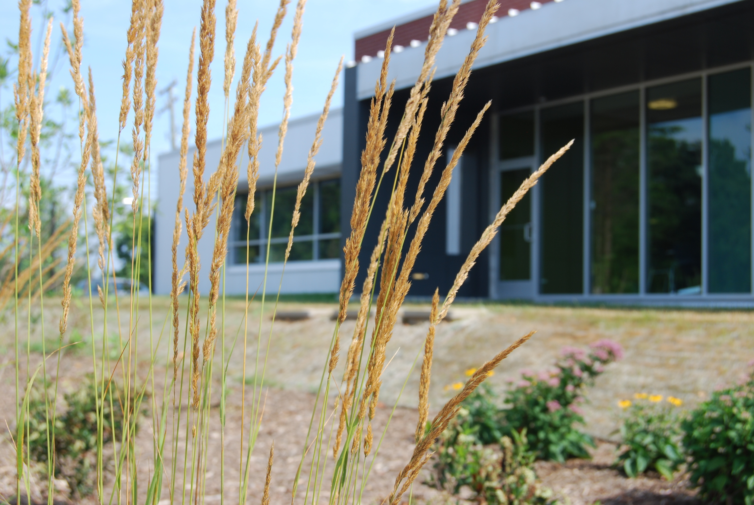 Employees enjoy ready access to natural spaces throughout the complex.
