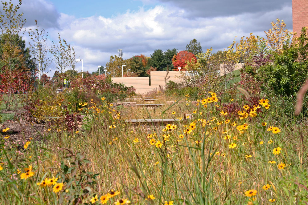 Regenerative design strategies include a native-planted drainage swale which creates an effective wildlife corridor traversing the expansive site.