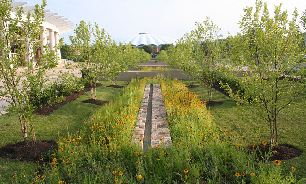 Biofilters on the entry plaza, featuring native Black-Eyed Susans and River Birches,  improve the stormwater quality in the watershed.