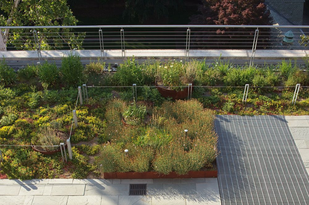 Cable rails and recycled steel bar grating complement the rich diversity of the rooftop landscape.
