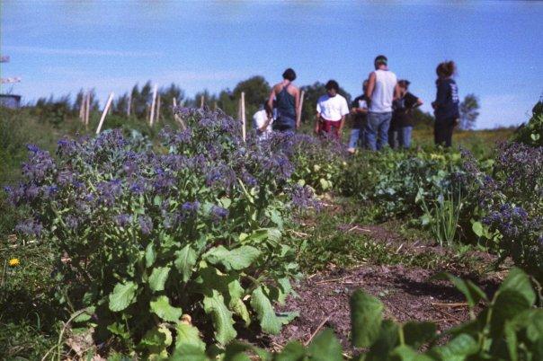 Acadia Garden.jpg