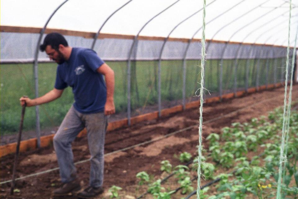 Eggplant hoophouse.jpg