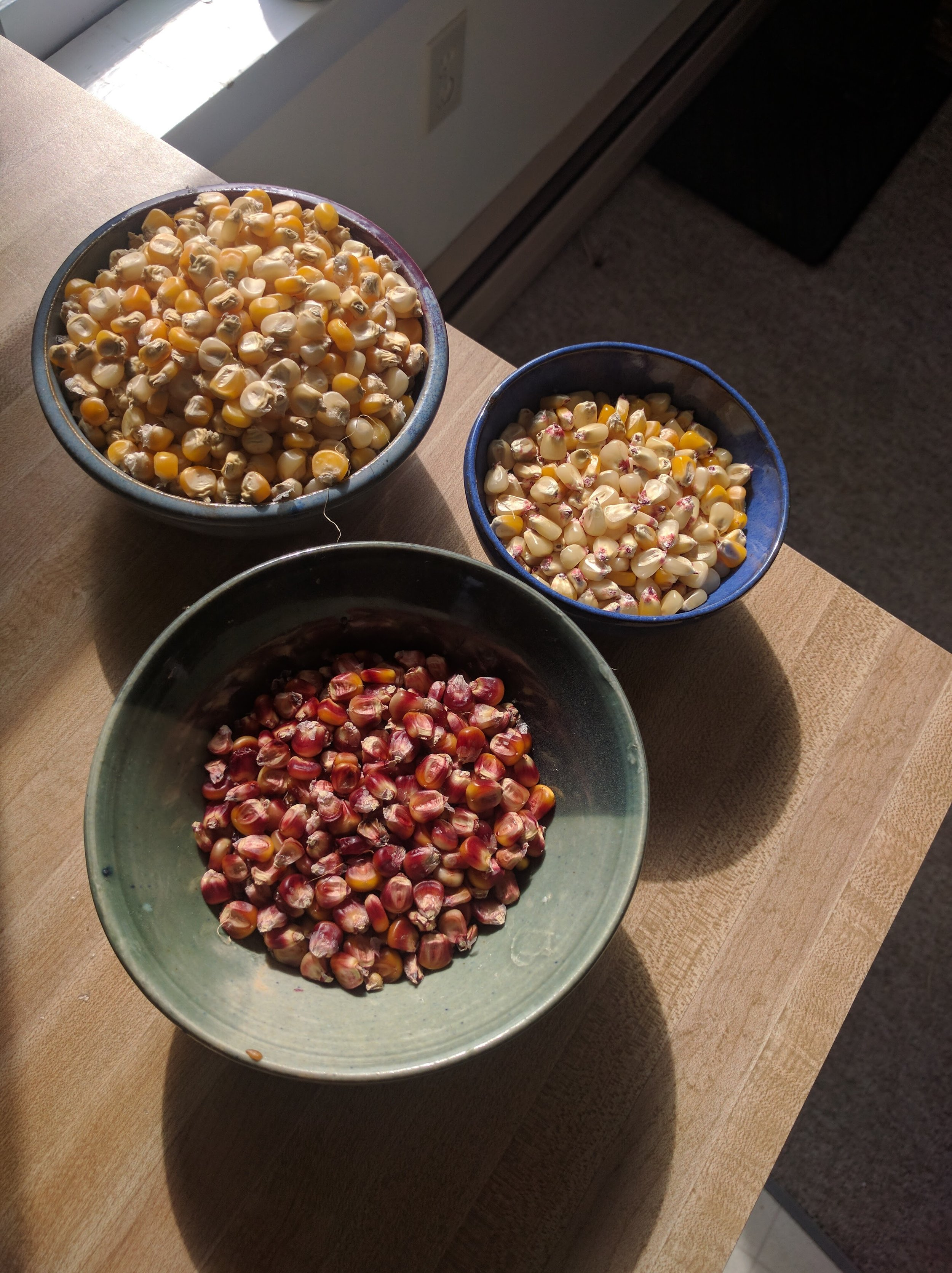 African corn seeds ready an waiting to be planted & later shared with CSA members.