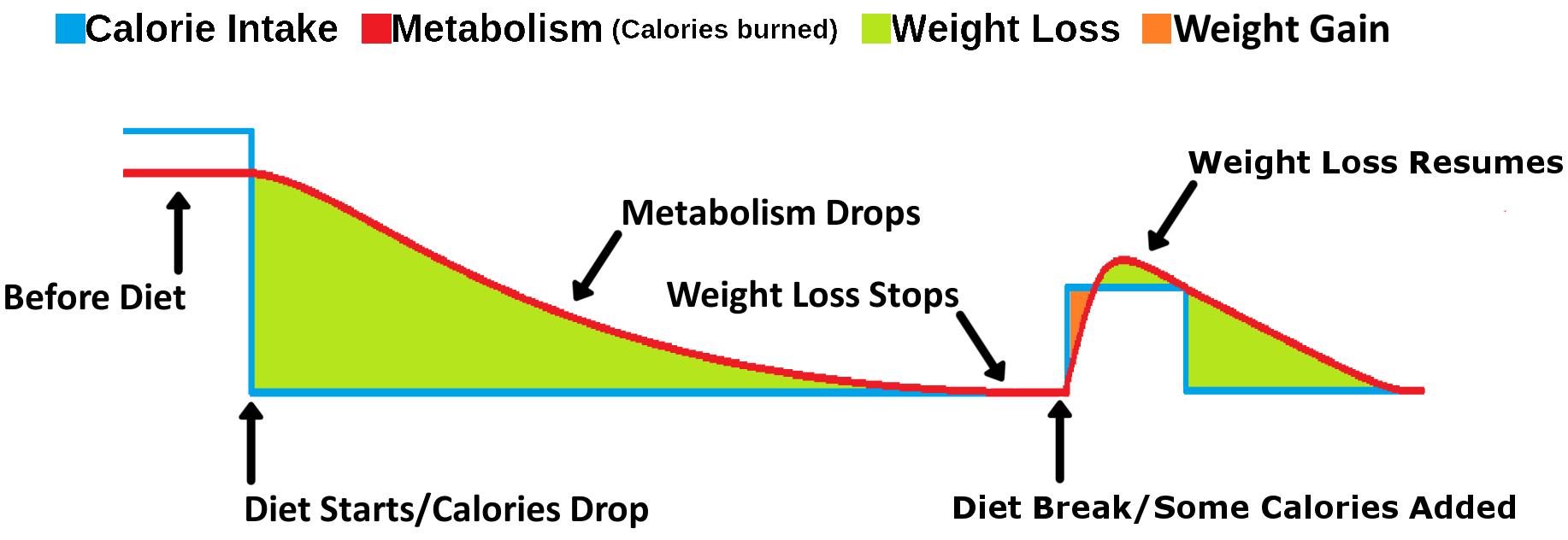 4 diet break - labeled.png