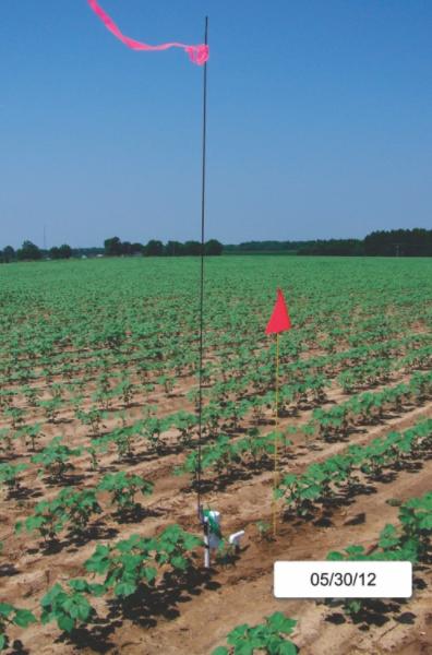 Figure 3. UGA-SSA in Cotton Field. Image credit:  Vellidis Group, UGA
