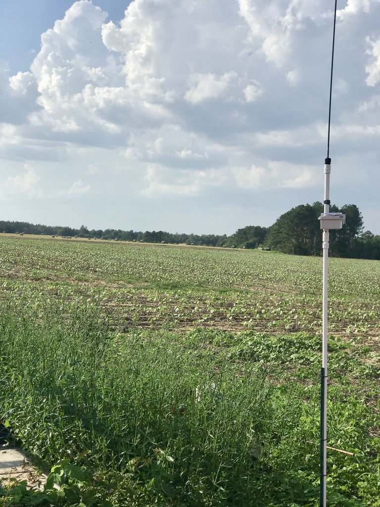 Cellular Base Station in cotton field.