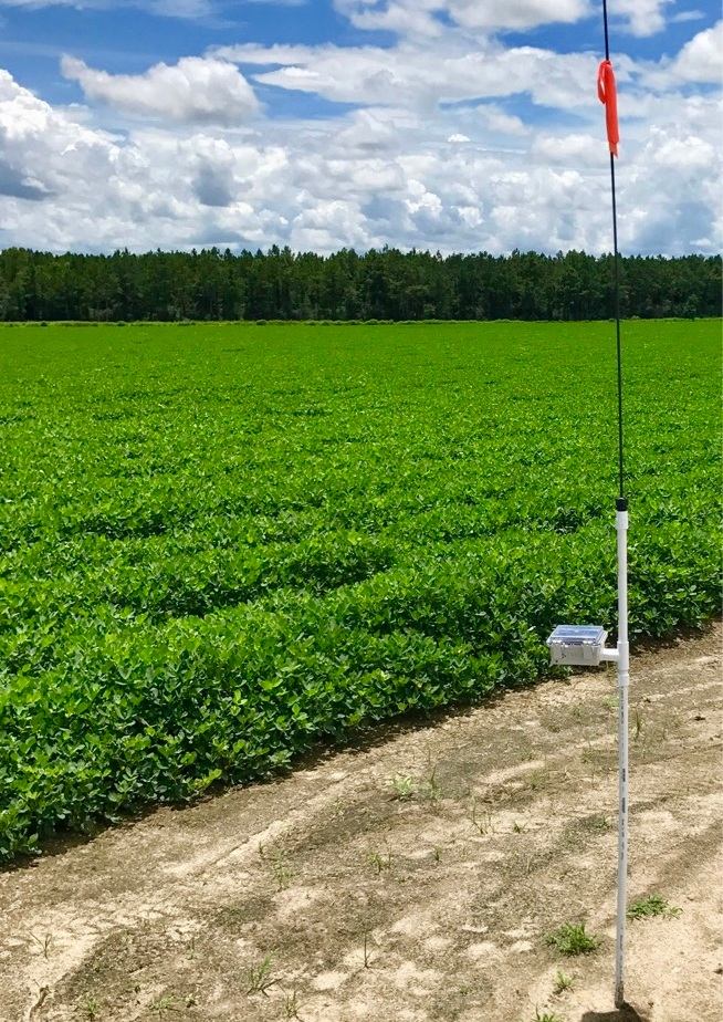 Cellular Base Station in peanut field.