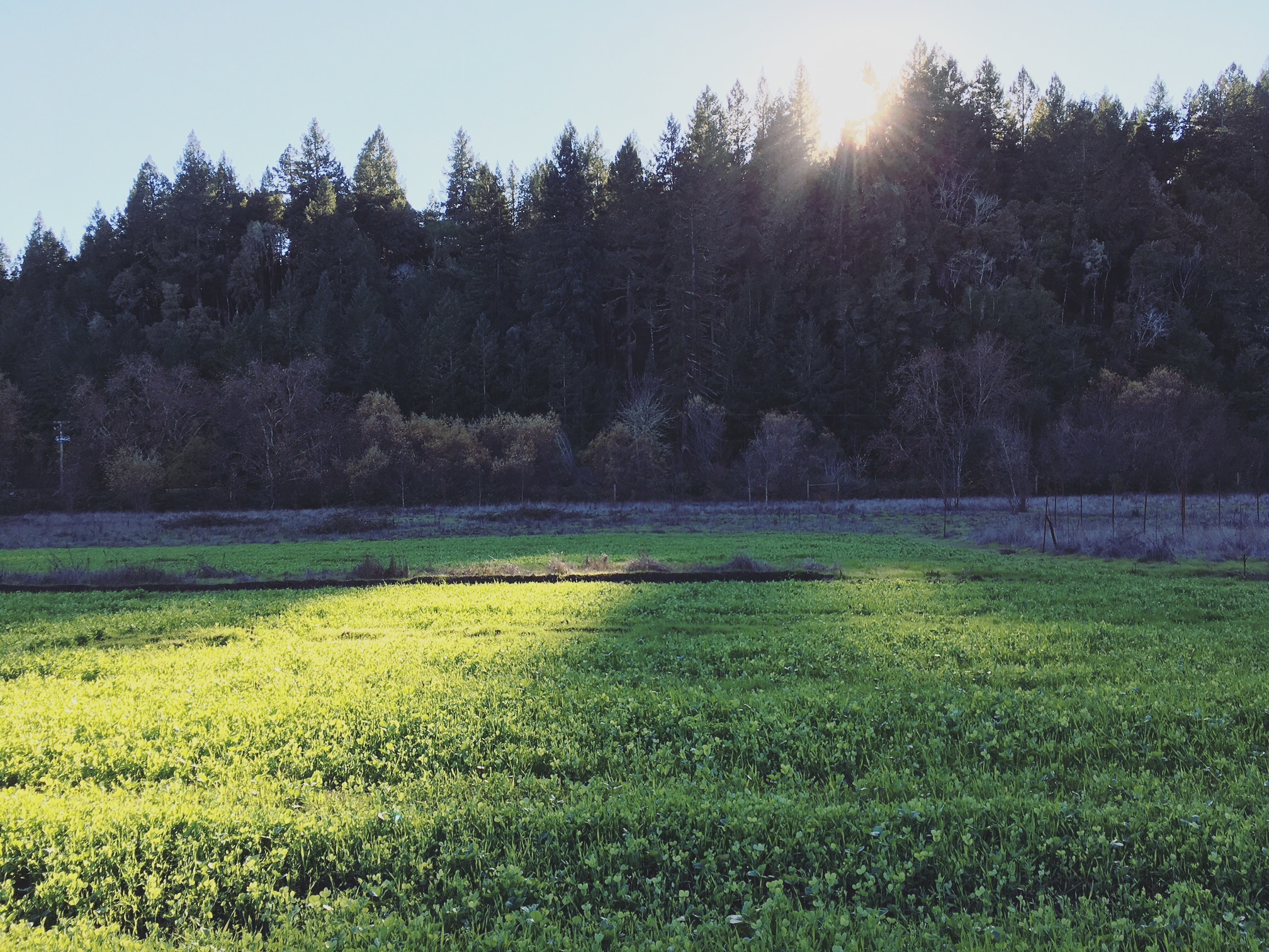 Next season's intensive veggie fields awash in long fall shadows