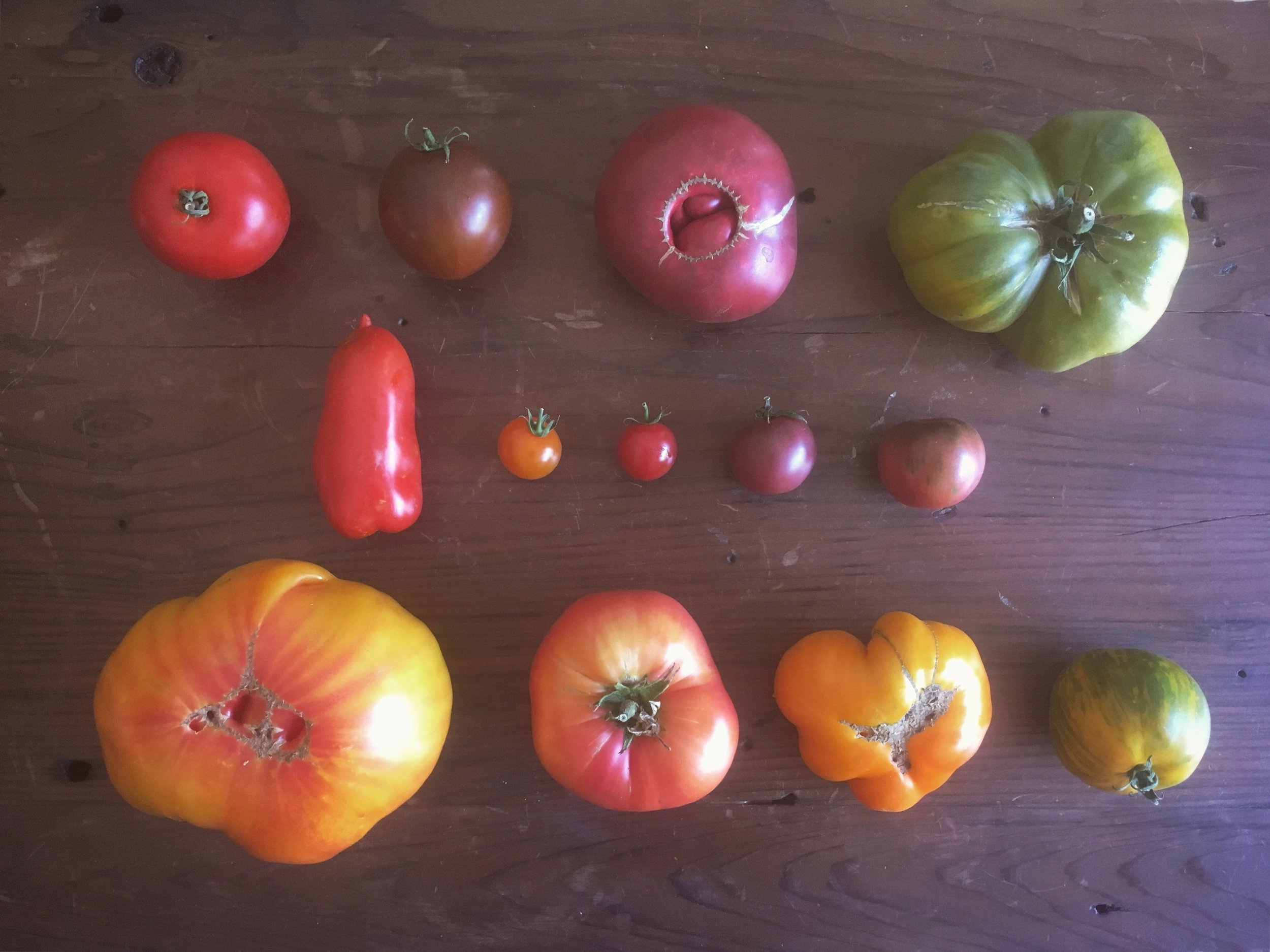 2017's Tomato Varieties: (Top to bottom like reading a book) New Girl, Black Prince, Cherokee Purple, Aunt Ruby's German Green, Paisano San Marzano, Sungold, Supersweet 100, Black Cherry, Black Vernissage, Striped German, Brandywine, Yellow Brandywine, Green Zebra. Which is your favorite?