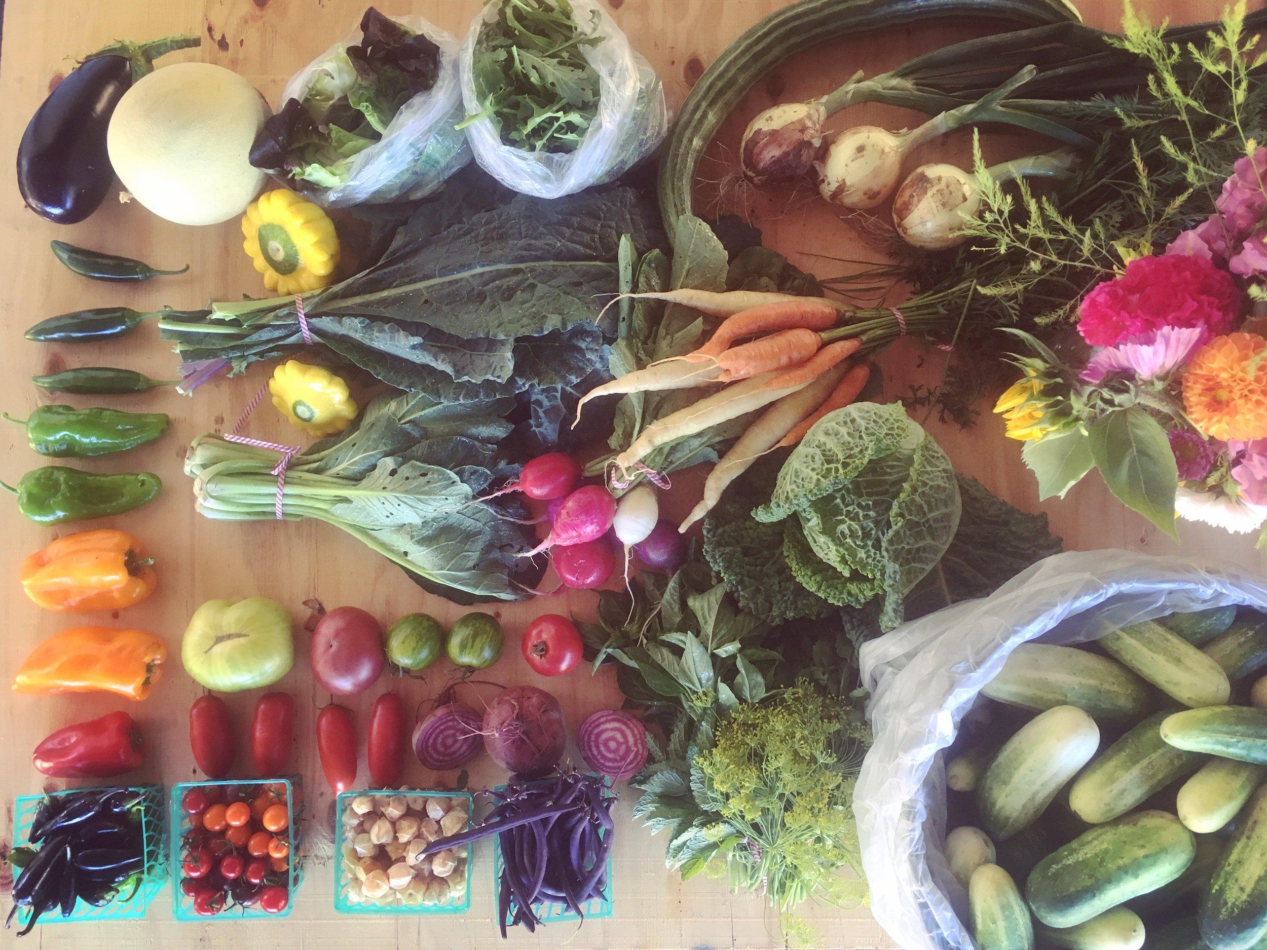 Week 9 sample harvest share