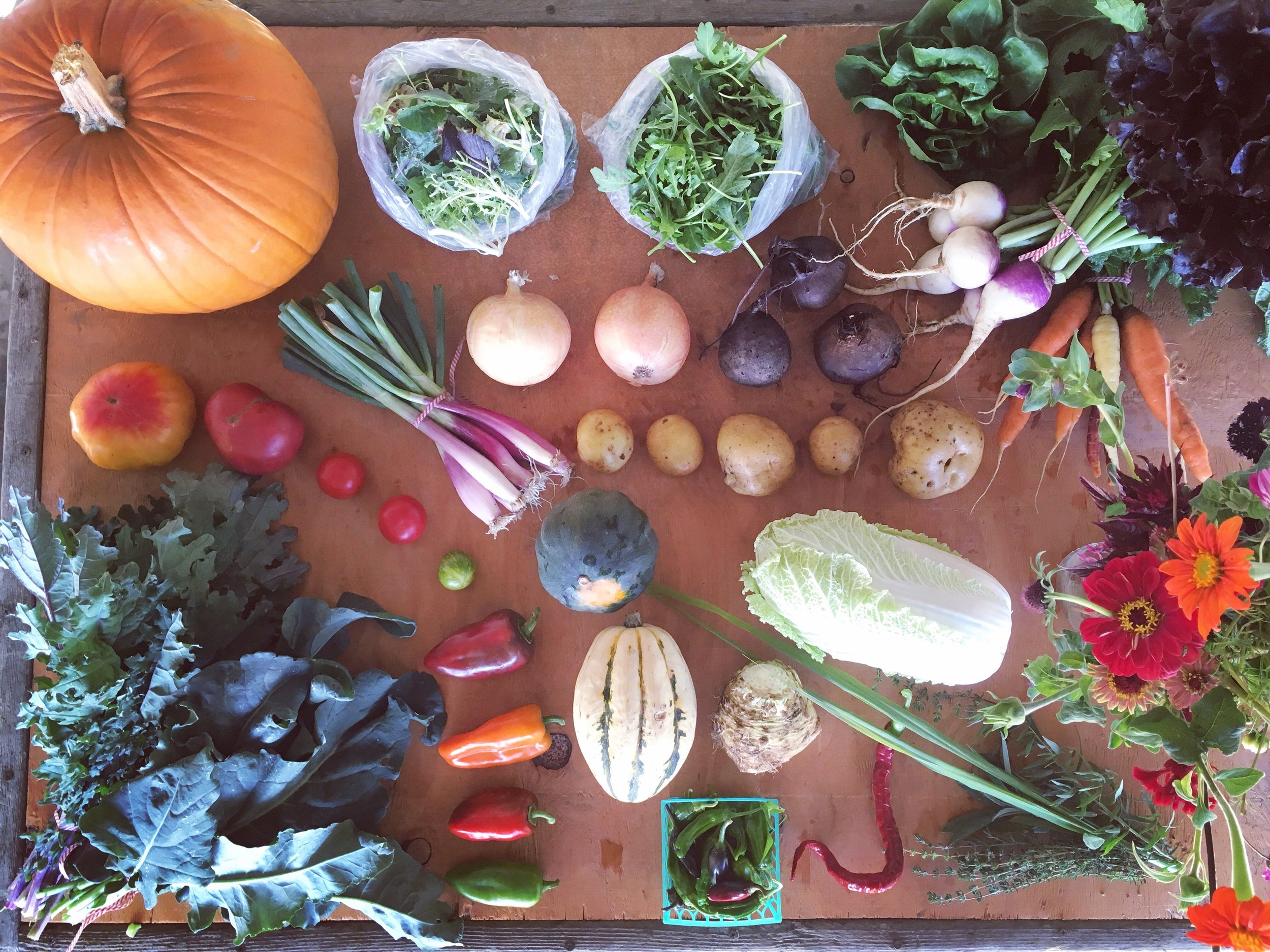 COST COMPARISON : At Farmer's Market rates, this sample share from late October 2017 contains $80.50 of produce ($53.50 worth of pre-harvested produce and $27 worth of u-pick crops, flowers, and herbs). If a two-adult, one bag share is $46.15 per week, that's $34.35 of savings!