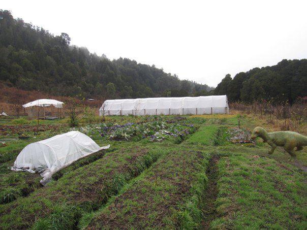 The raised bed gardens at La Granja Valle Pintado. We had dinosaur pest problems
