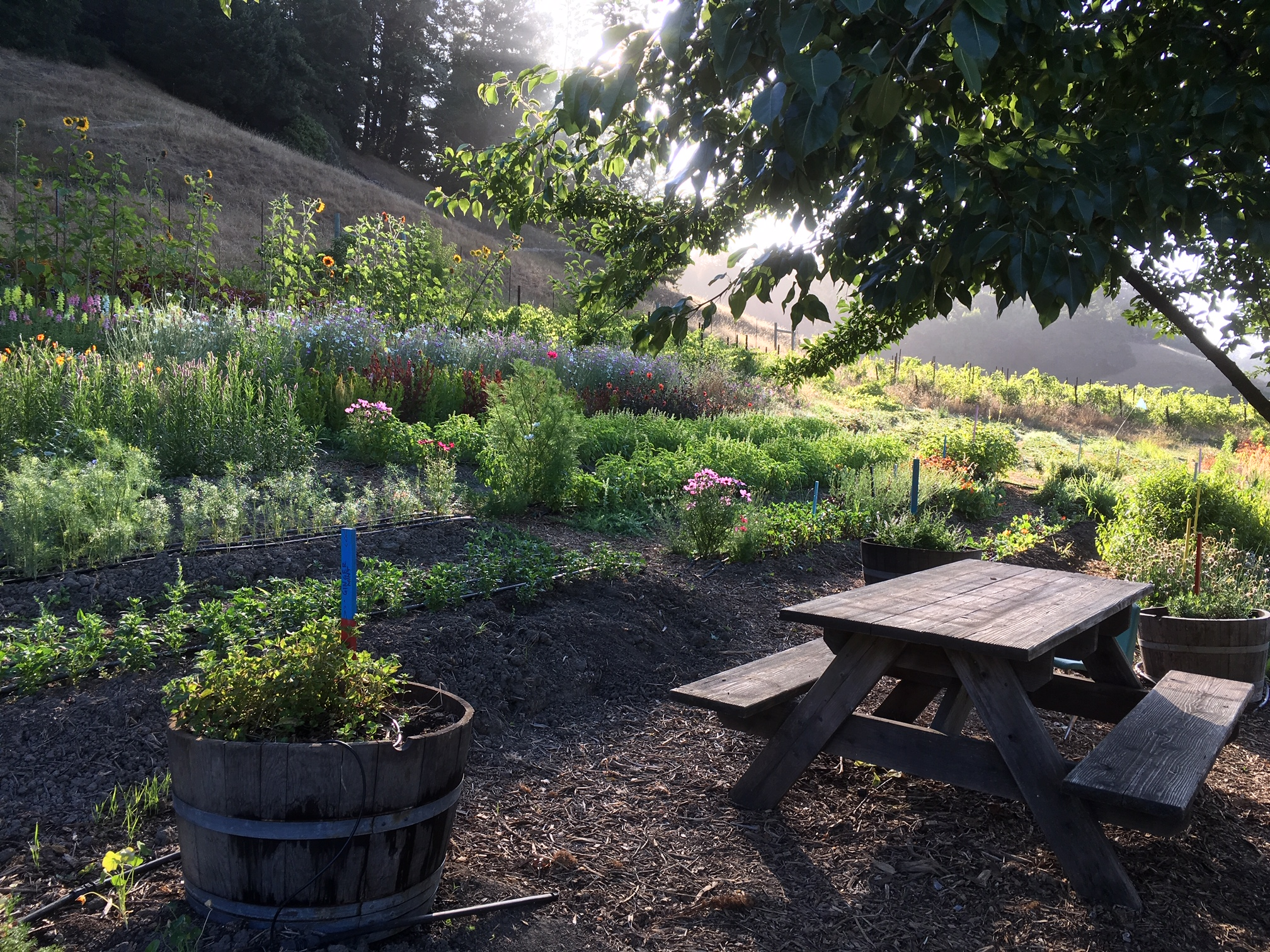 It's going to be hot on Saturday! Highly recommend a morning visit to the garden!