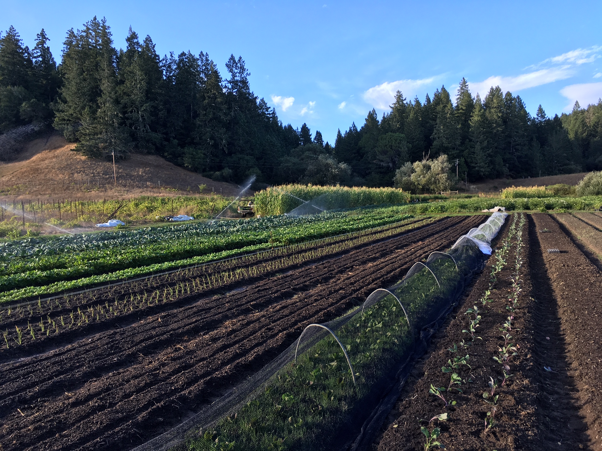 Summer harvests, Fall plantings… must be late August!