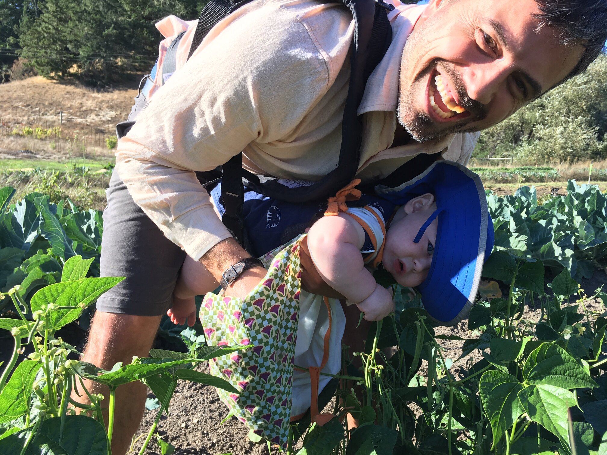 Chase helps Jaime harvest from the new green bean plants