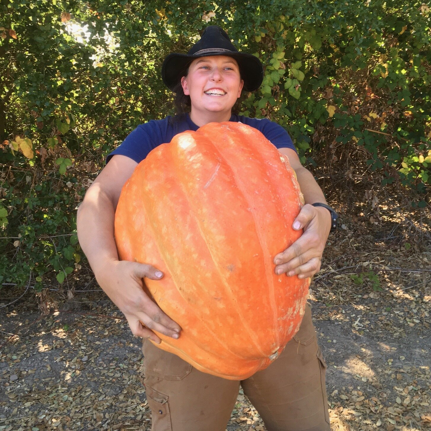 They aren't as big as Dr. Pumpy, pictured here, but there is a nice Jack-O-Lantern pumpkin waiting for you out on the farm!